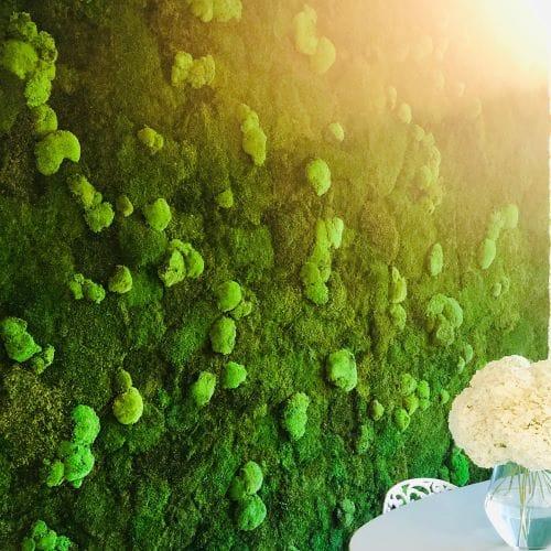 stena z machu zelena