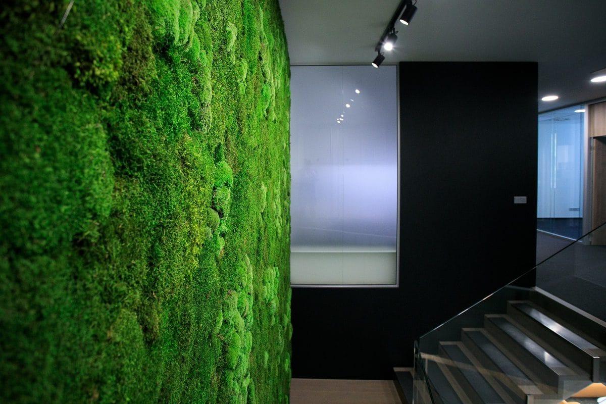 zelena machova stena