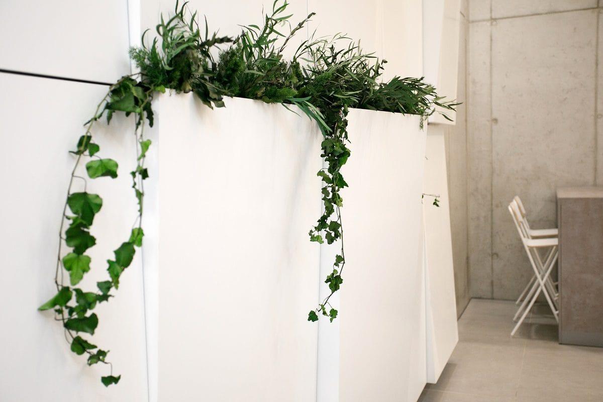 rastliny v stene