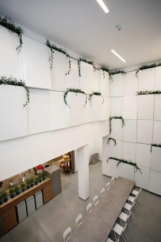 rastliny do steny