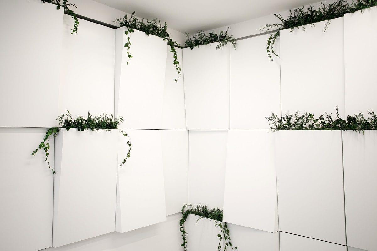 rastliny na stene
