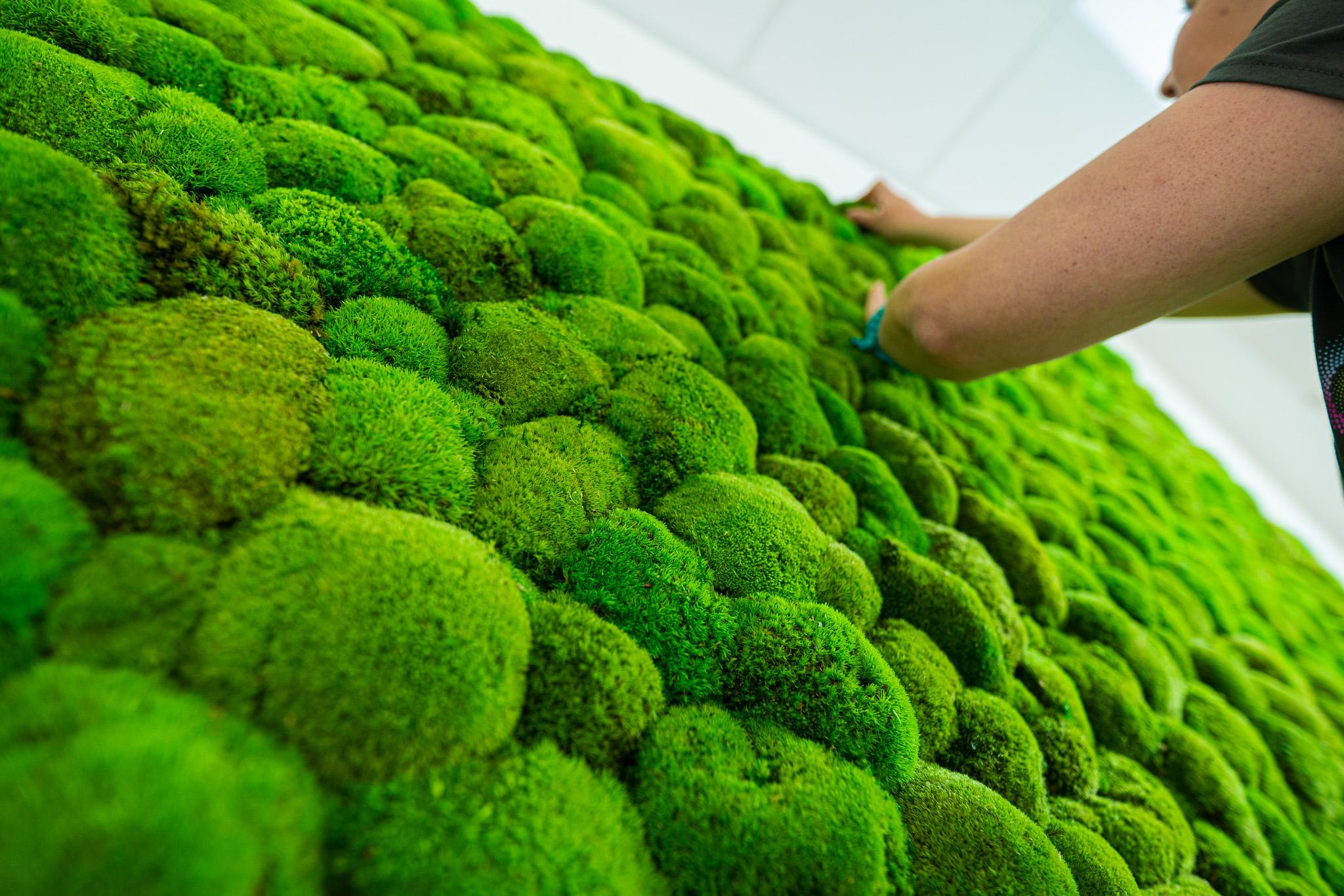 zelena stena