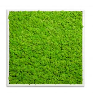 machova-stena-greenin-soft