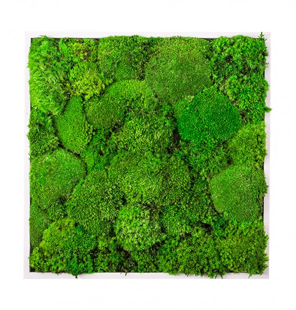 machova-stena-greenin-hill