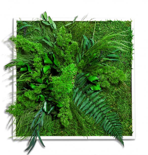 machova-stena-greenin-leafy