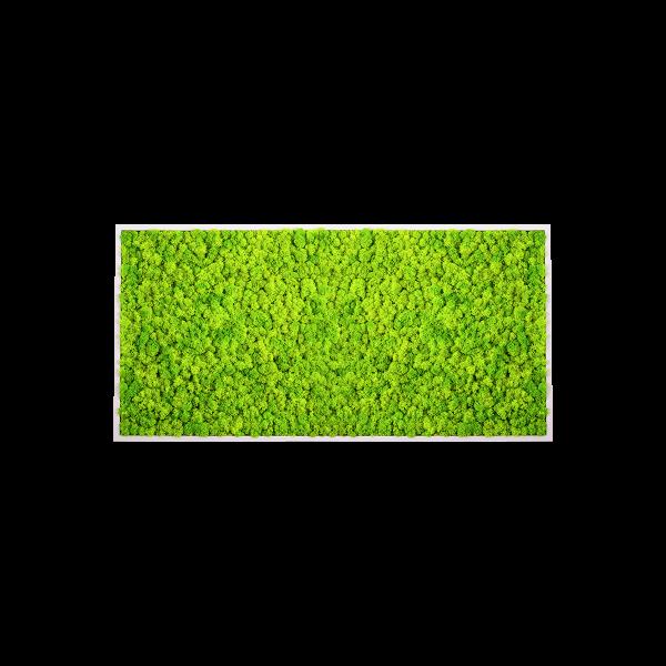 zelený mach na stenu