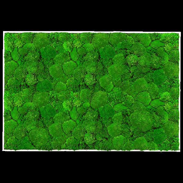 mach na stenu zeleny