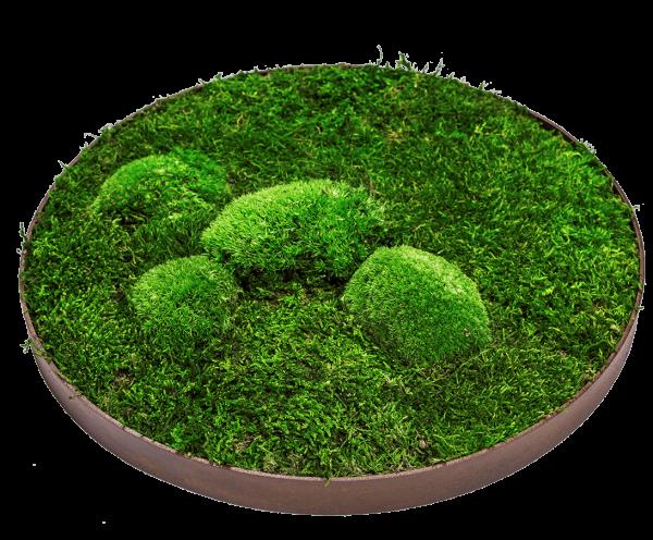 machovy obraz kruh zeleny