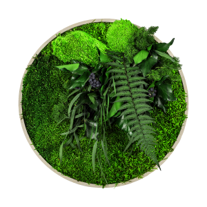 machovy obraz s rastlinami